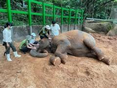 亚洲象「友恺」身体不适 北市动物园盼大家齐集气